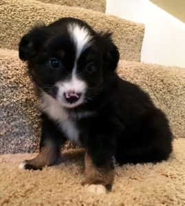 Franz - AVAILABLE - $550
